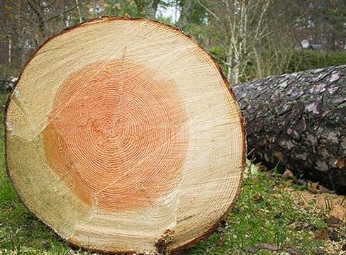 البحث العلمي حول الخشب والرطوبة